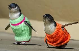 pinguinos con jersey